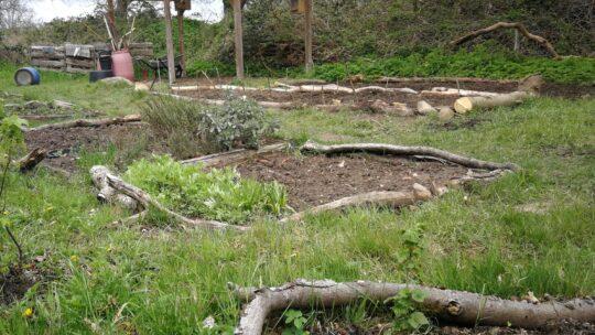 Schulgartenprojekt gestartet