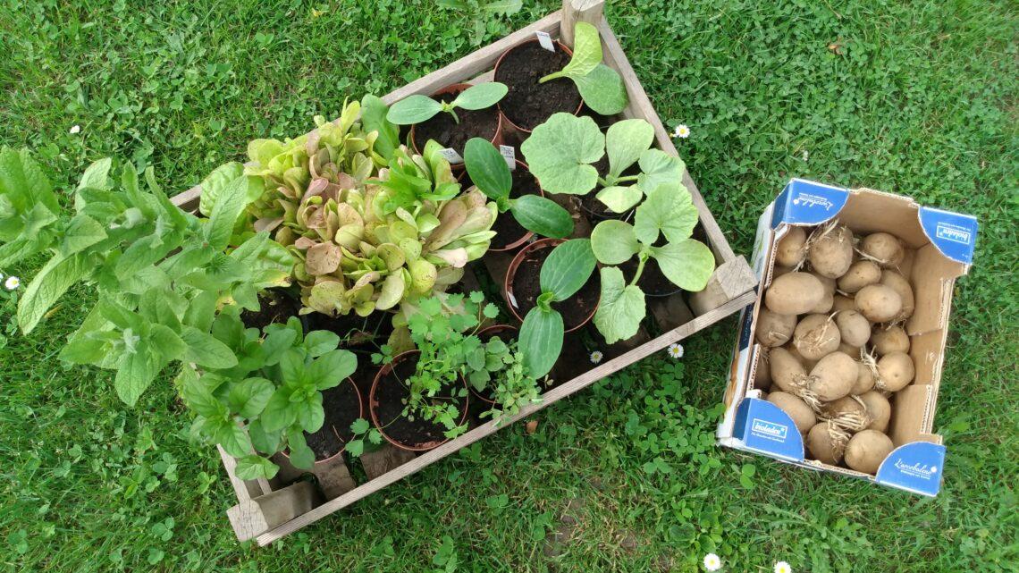 Spenden für den Schulgarten – Danke an die SoLaWi Güstritz & Volzendorf und den Biogartenversand in Jeebel
