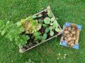 Spenden für den Schulgarten – Vielen Dank an die SoLaWi Güstritz & Volzendorf und den Biogartenversand in Jeebel